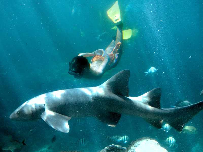 swim-with-sharks-in-xcaret
